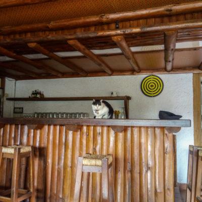 Le bar qui servira d'accueil